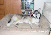 Лежак для собаки своими руками